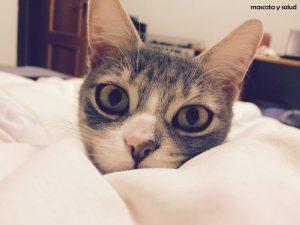 gato ojazos