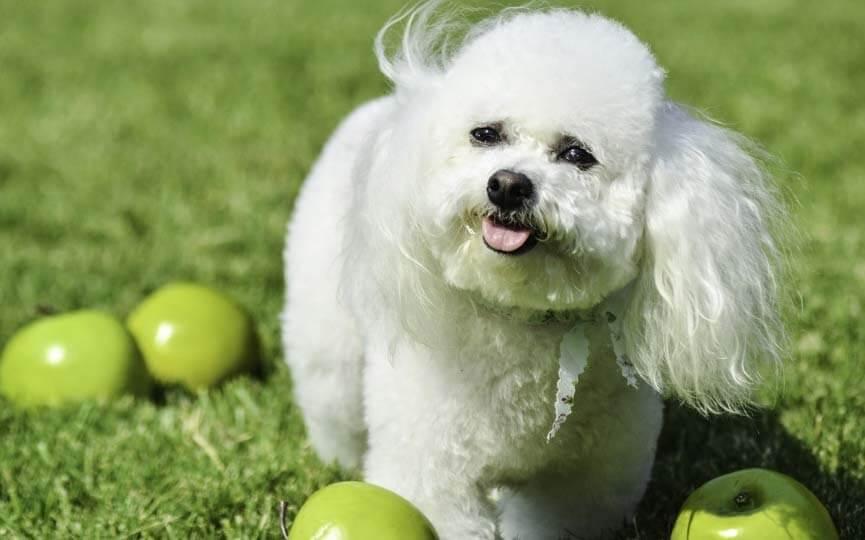 dieta sana limpiar dientes a un perro