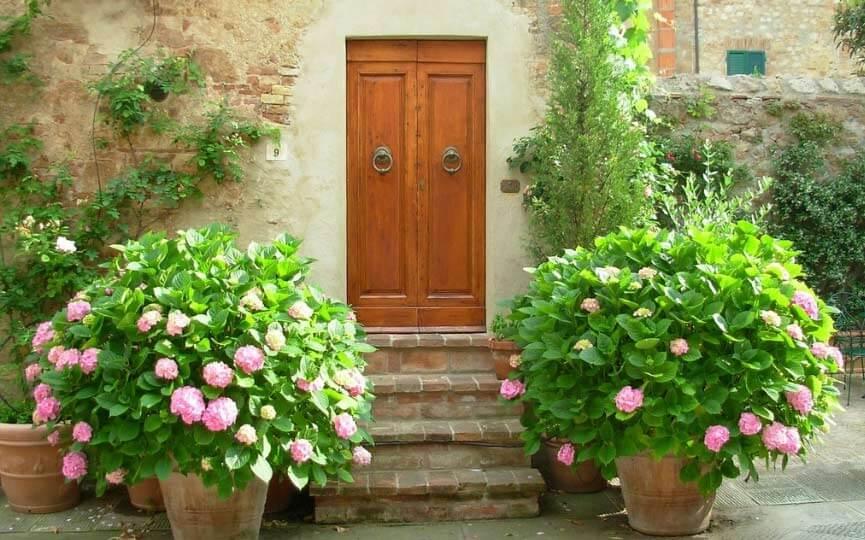 hortensia plantas toxicas para perros