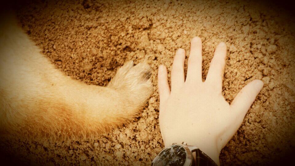 amistad que puedes aprender de los perros