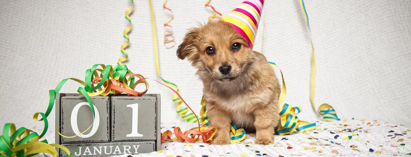 fin de año, perro