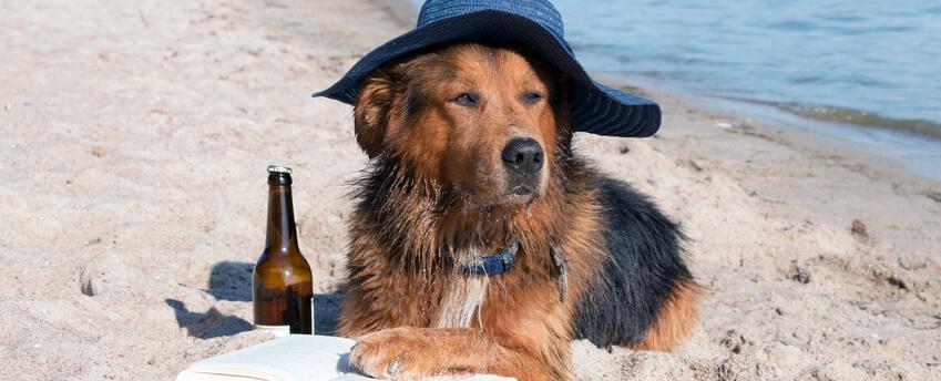 perro bebiendo cerveza, cerveza, perro