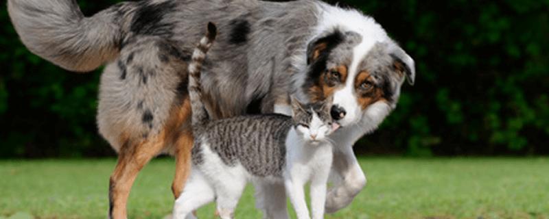perro dando un beso a gato, perro, gato