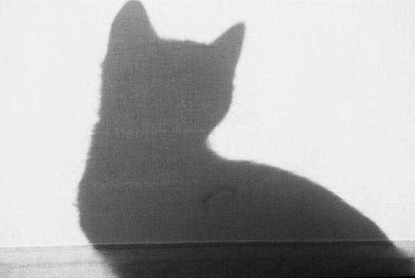 comportamiento de los gatos.