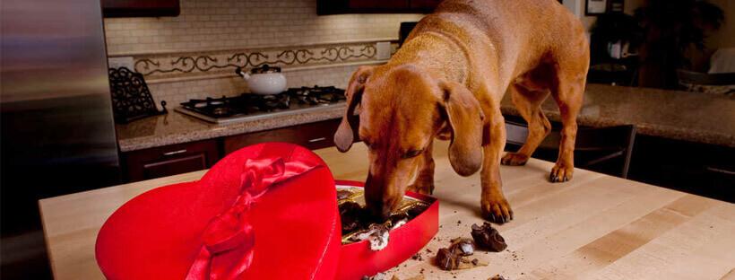 comida-prohibida-para-perros
