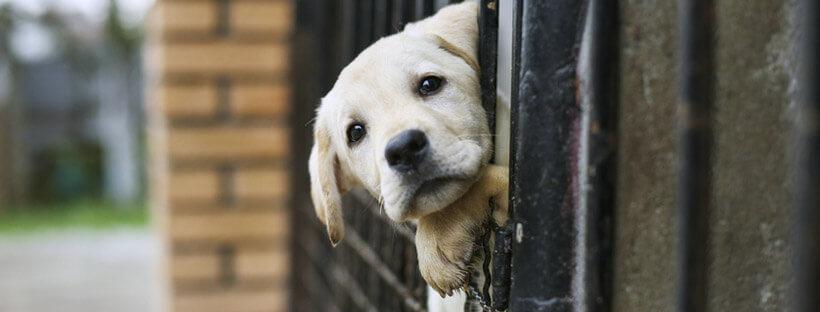 cuidados-de-un-cachorro