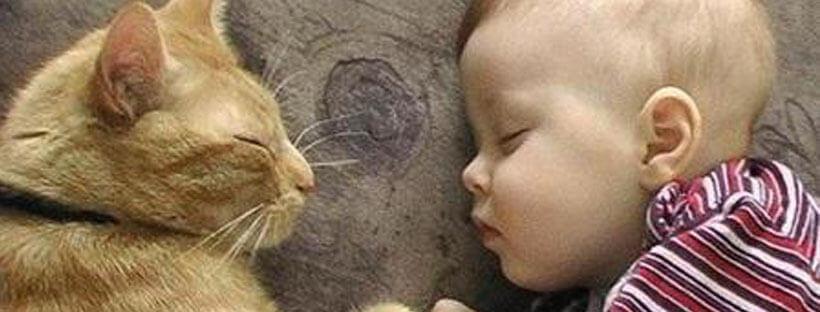 gatos-en-el-embarazo