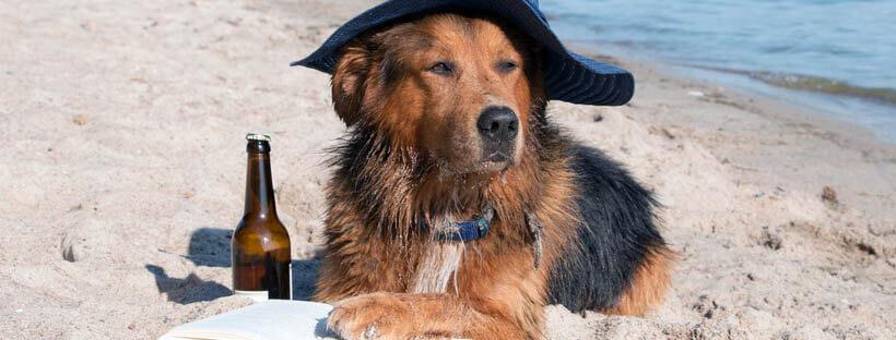 playa-con-perros