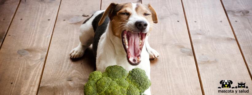 Con los snacks estas mascotas suelen ser juguetones.