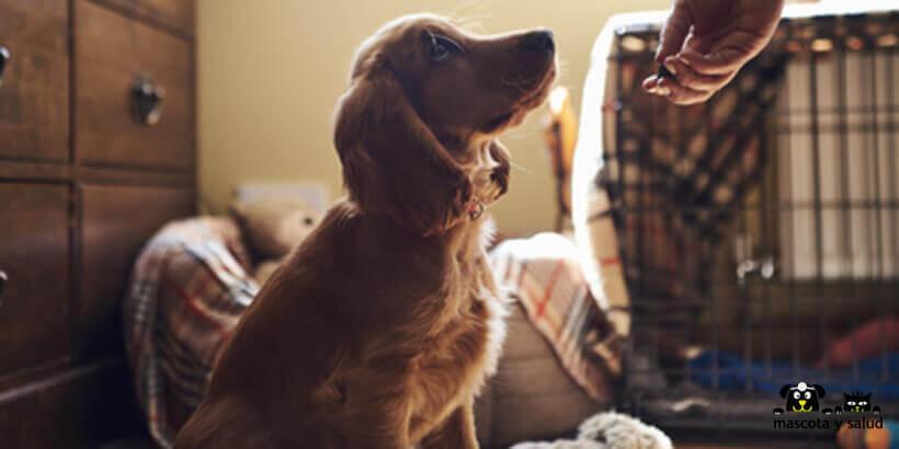 La alimentación es fundamental en los perros.
