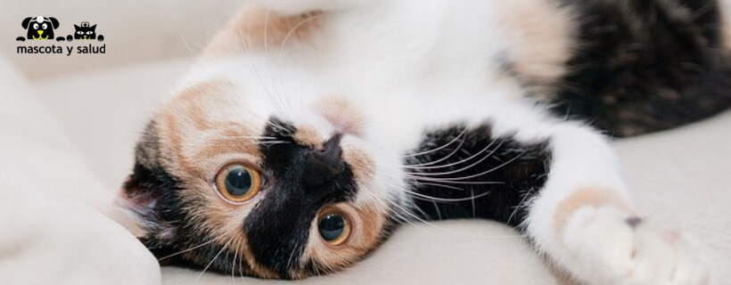 En cuanto detectamos los síntomas, tenemos la obligación de acudir al veterinario.