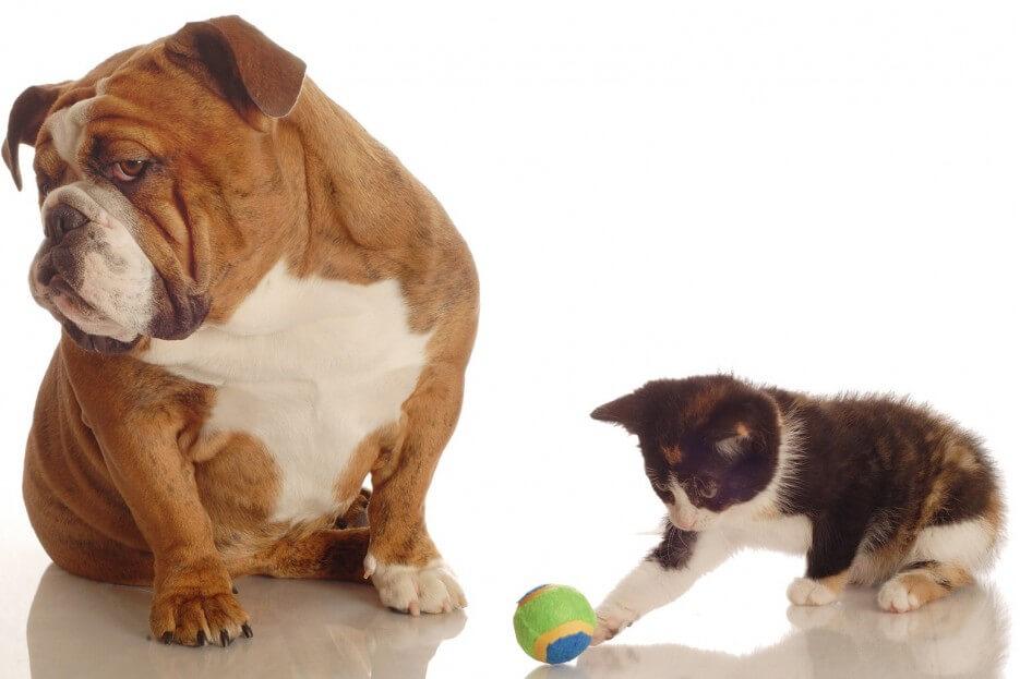 Perro y gato inteligente jugando