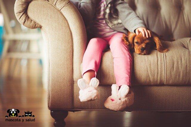 Crecer con una mascota permite conocer de primera mano la responsabilidad de tener en nuestra casa a otro ser vivo.