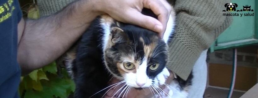 Entrevista a Daniel Rodríguez, veterinario de Mascota y Salud, sobre la caspa en gatos.