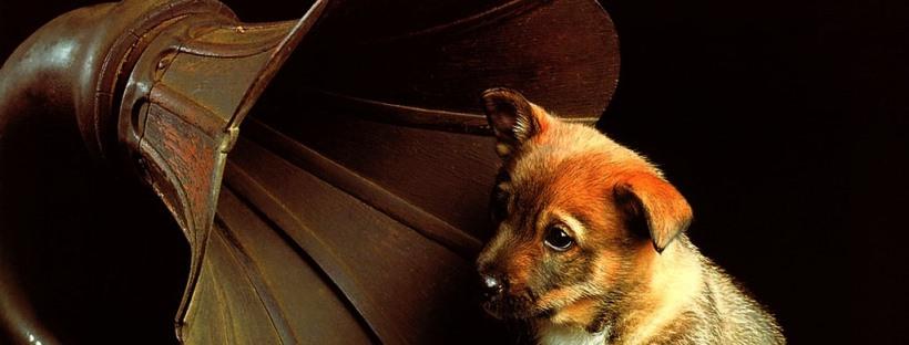 La música es una herramienta muy útil para mejorar la calidad de vida de los canes.