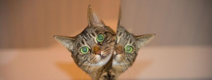 Cuatro gatos emulan a las populares hermanas Kardashian.