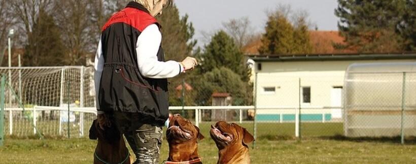 Los perros tienen una capacidad de recuerdo muy similar a la memoria episódica de los humanos.