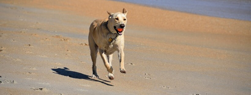 Que nuestras mascotas se diviertan realizando alguna actividad física es importante para su salud.