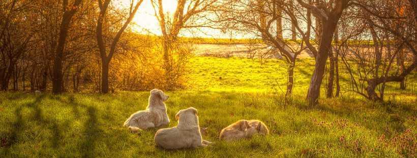 Perros en una puesta de sol.