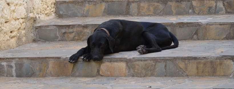 Perro tumbado en unas escaleras.