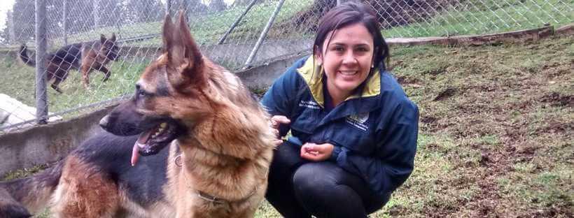 Etóloga canina con un pastor alemán