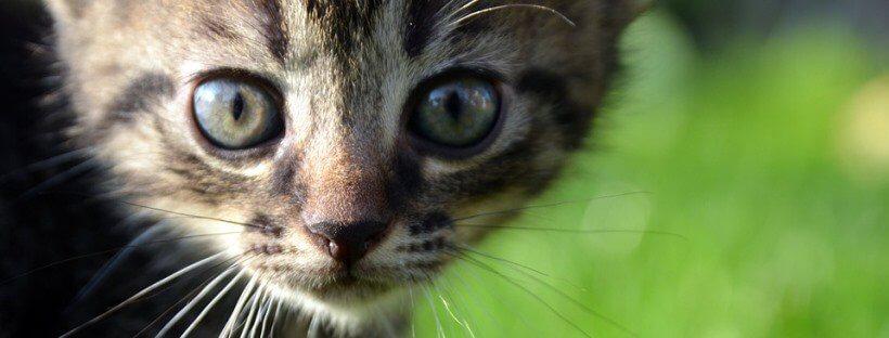 Primerísimo primer plano de un gato pequeño en un césped