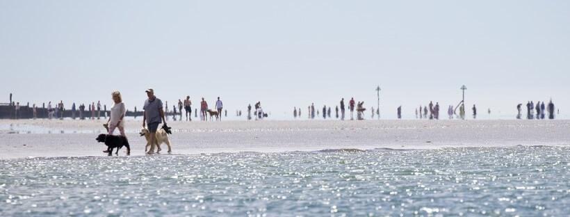 Una pareja paseando con su mascota por la playa