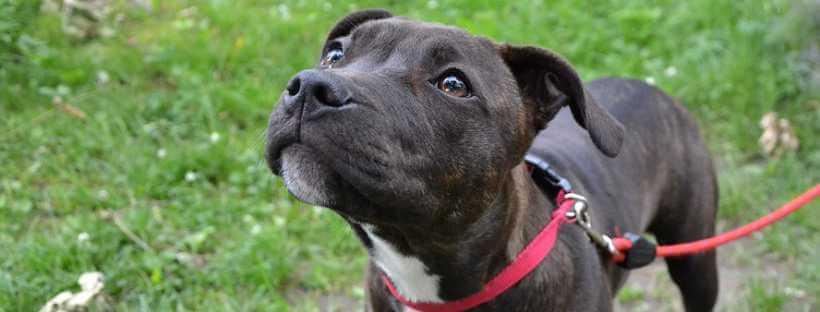 Perro adiestrado para la detección de epilepsia