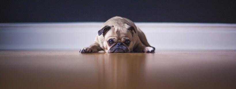 Perro tumbado con ansiedad