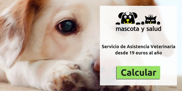 Calcular precio de servicio veterinario