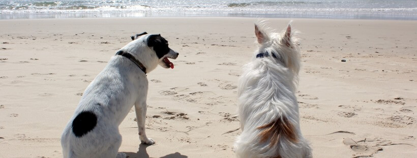 Dos perros disfrutan del verano en una playa