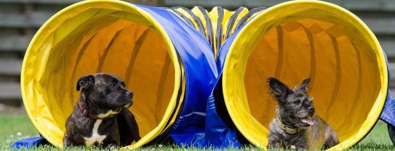 Dos perros tumbados en un túnel empleado en una prueba de agility.