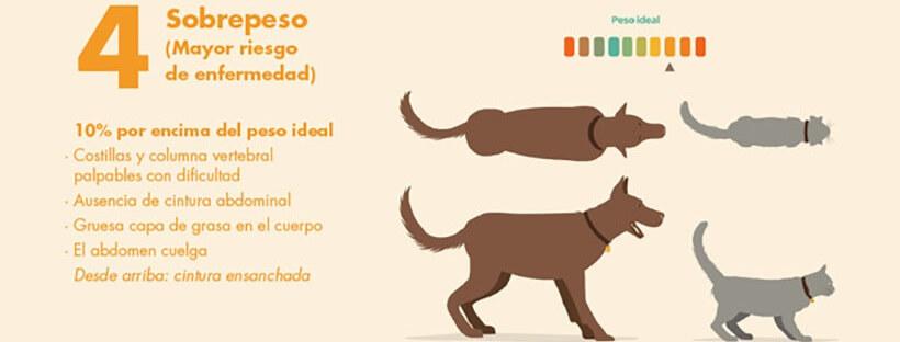 Guía Práctica para saber el peso ideal de tu perro o gato.
