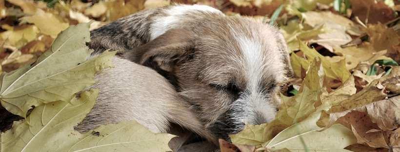 Un perro soñando entre hojas.