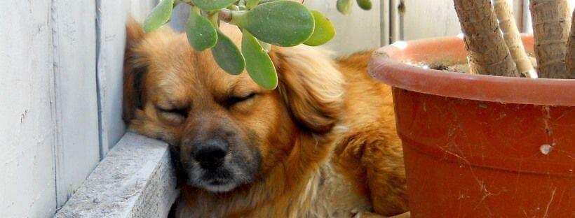 Los perros sueñan.