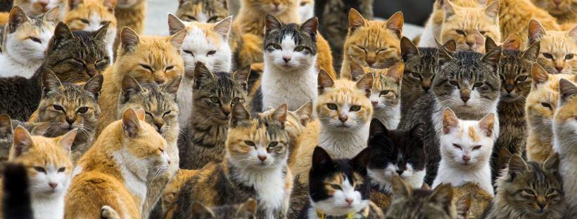 gatos-isla