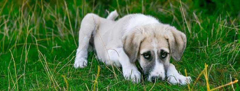 Perro mestizo enfermo en un jardín.