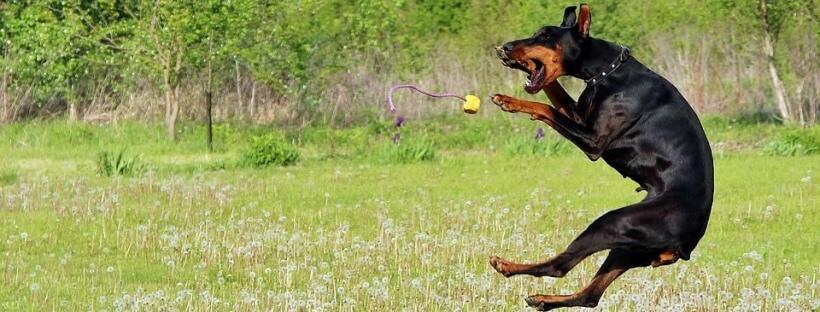 La visión de los perros les permite captar con más detalles los movimientos.