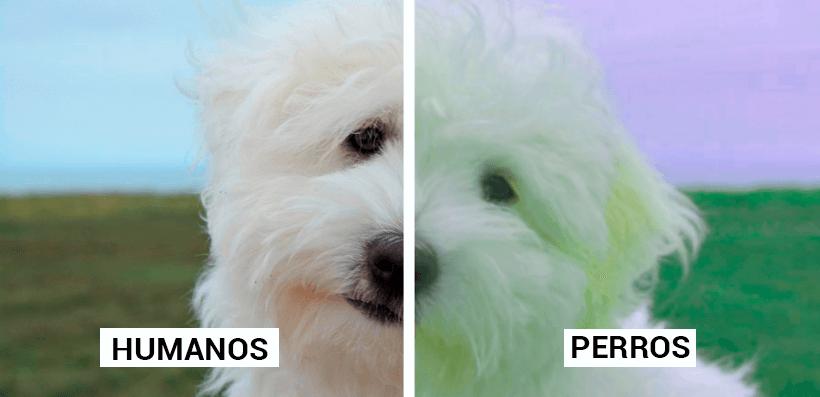 Contraste entre lo que ve un humano y lo que ve un perro.