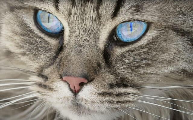 gato-mascota-y-salud