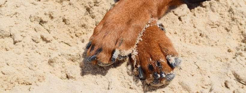 Patas de un perro reposadas en la arena fina de una playa.