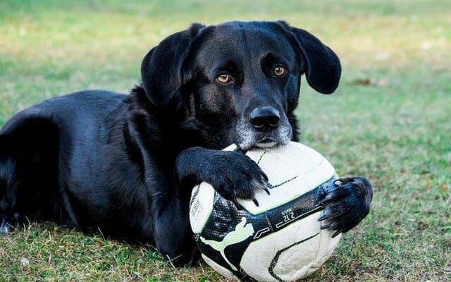 sindrome perro negro