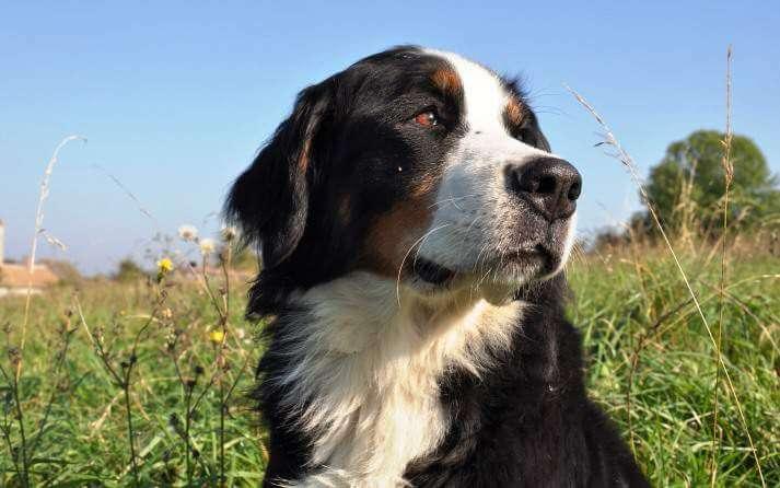 Caracoles y babosas, un riesgo para nuestros perros