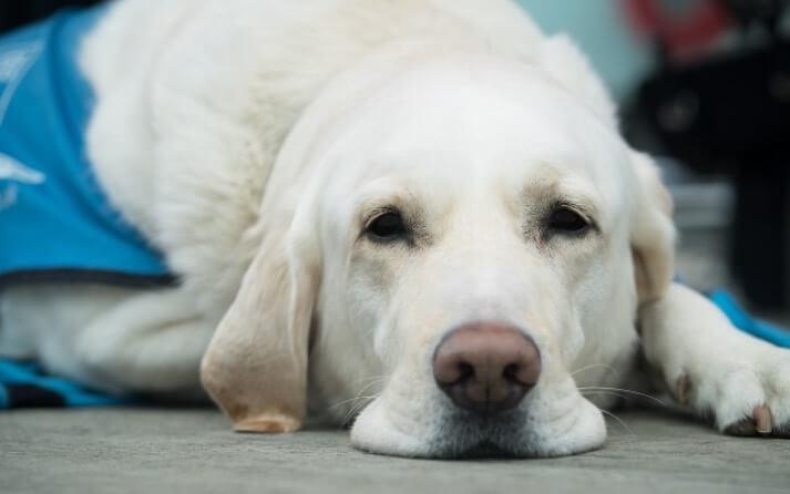 La importancia del arnés en perros.