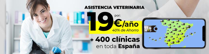 Asistencia veterinaria para tu perro