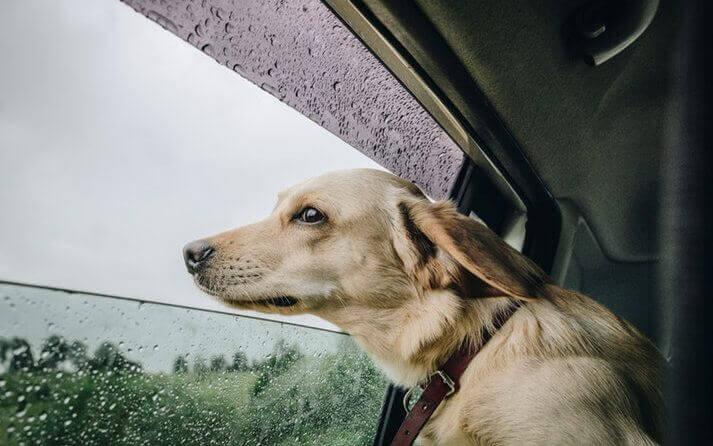 cambio de tiempo y estacion afectan a los perros