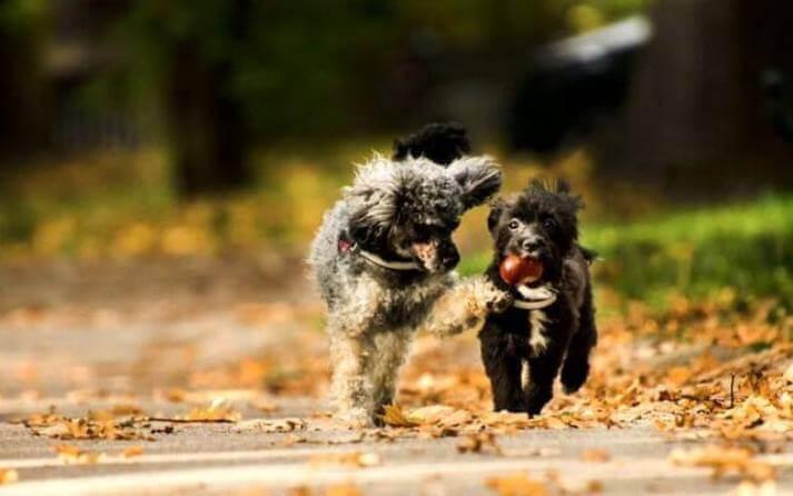 Dos perros juegan juntos.