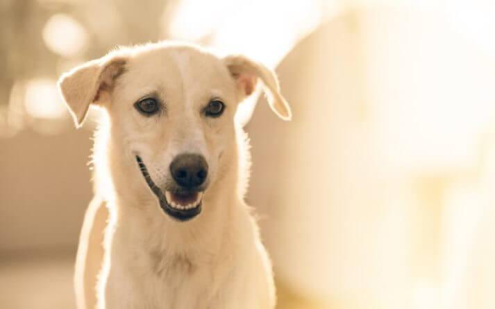 dentadura-perro
