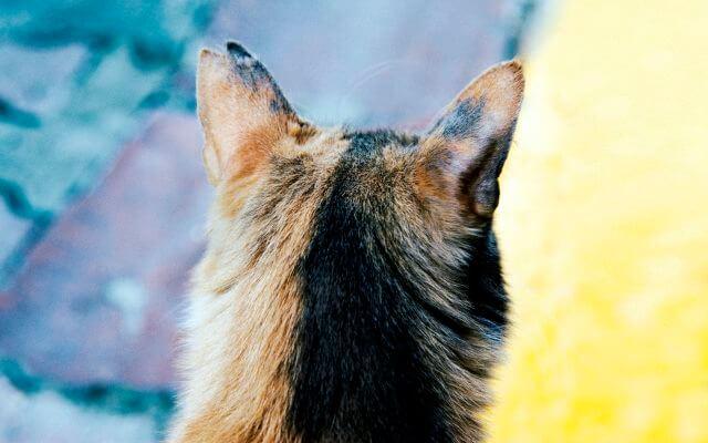 La tiña en gatos puede producirse por diferentes causas.
