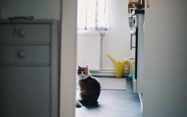 Existen diferentes remedios caseros para la tiña en gatos.